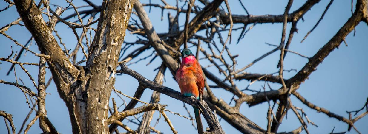 Madikwe Bird List