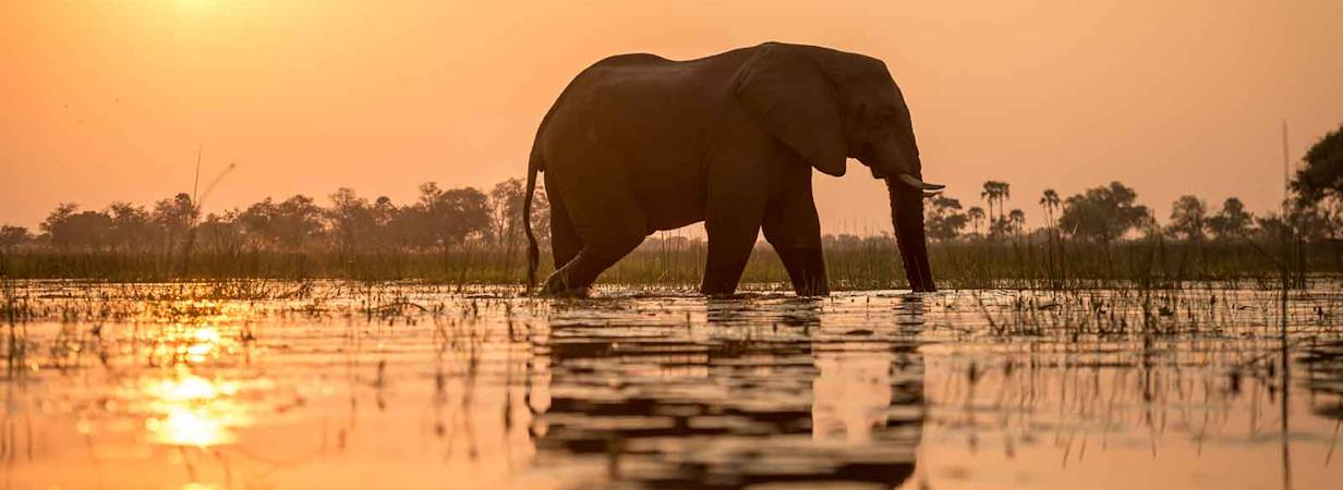 Discover Botswana Wildlife Safari