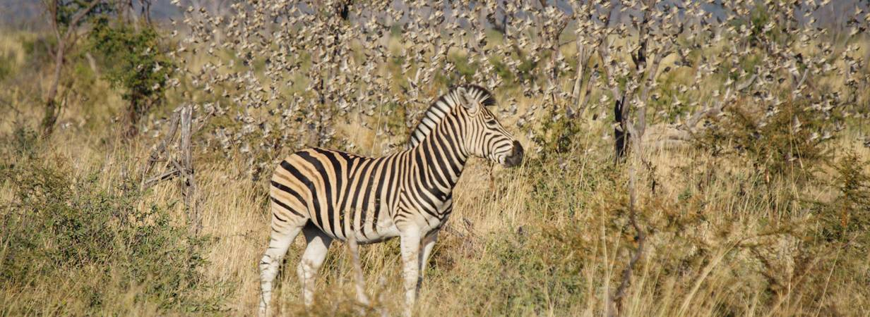 Madikwe Wildlife Photo Gallery