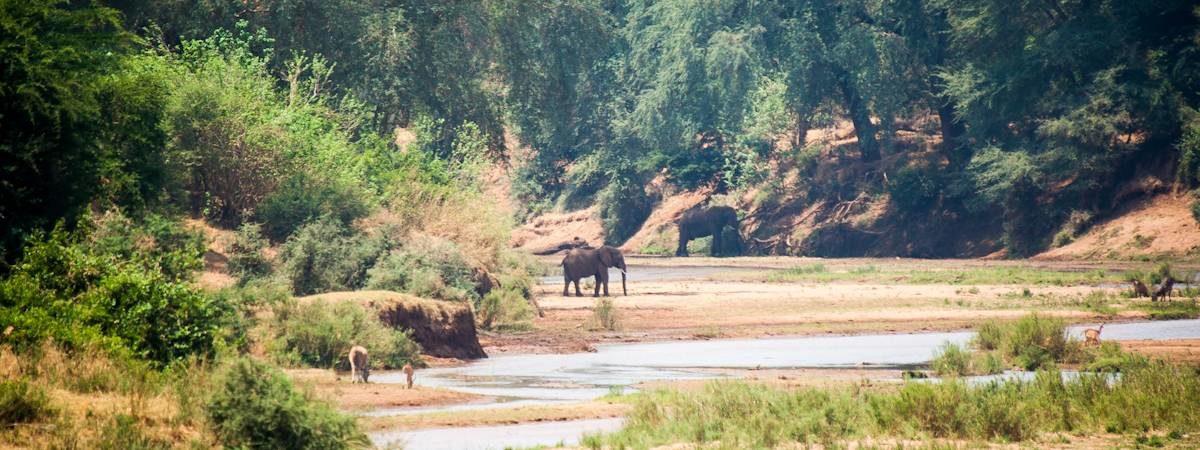 kruger national park south africa travelkruger national park