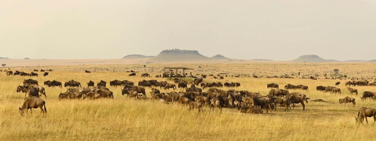 Serengeti Safaris in one of the most amazing places in Africa