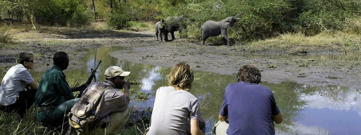 Malawi Big Five Safari