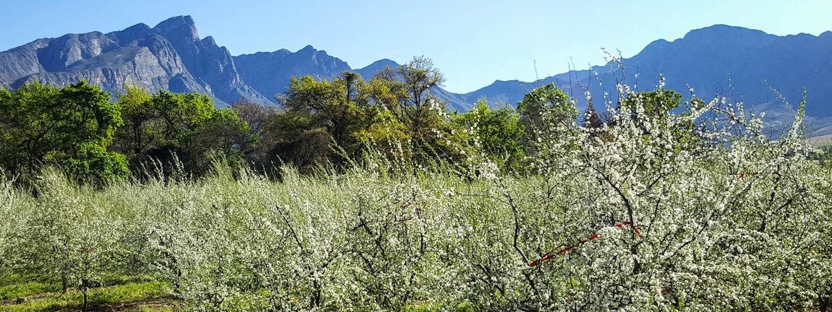 Tulbagh Scenery