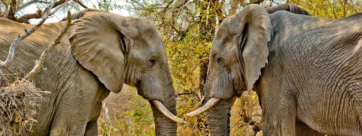 Kruger Park Elephant Photo Gallery