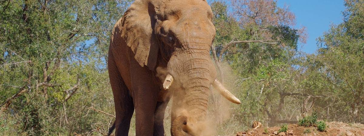 Madikwe Elephant Photo Gallery