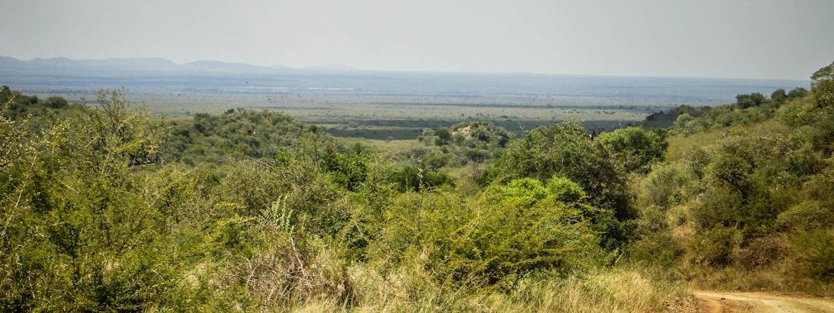 Madikwe Scenery Photo Gallery