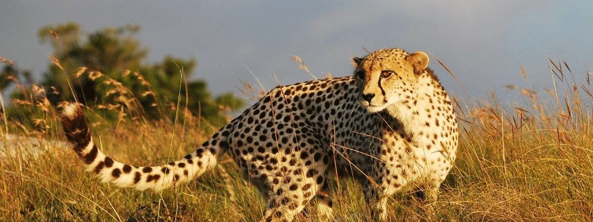 Cape Wildlife Family Safari