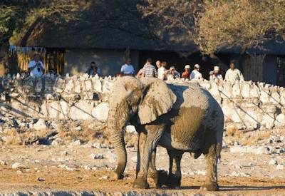 Affordable Namibia Self Drive Safari