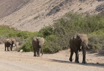 Desert Elephants & Rhino Safari