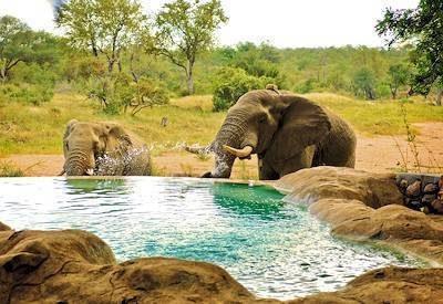 Timbavati Self Drive Safari | South Africa Safaris