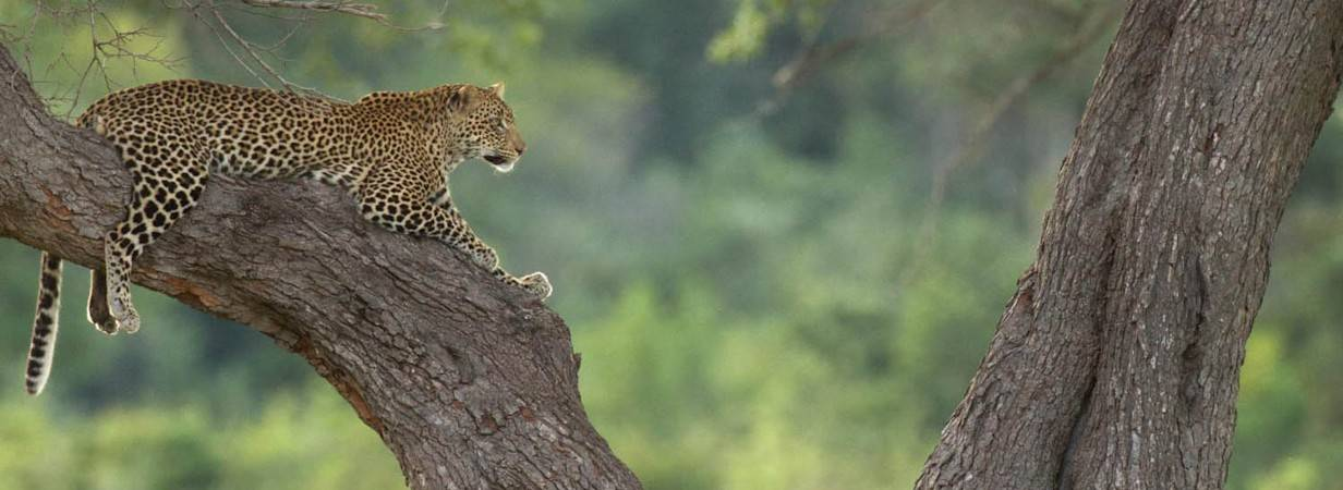 Best of Zambia Safari