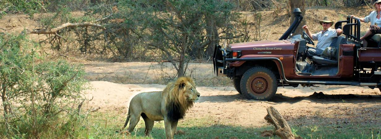 Luxury For Less Safari